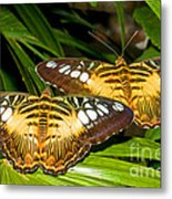 Clipper Butterflies Metal Print