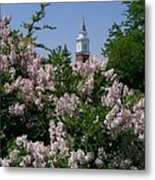 Clock Tower And Lilacs Metal Print