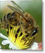 Close Encounter Of The Bee Kind Metal Print