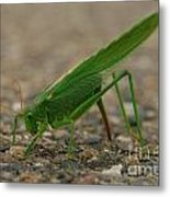 Close Encounter Of The Green Kind Metal Print