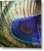 Close Feather Metal Print