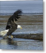 Close To Lunch Time Metal Print