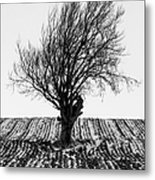 Close Tree In Snow Metal Print