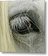 Close-up Details Of Gypsy Vanner Horse Metal Print