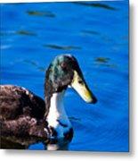Close Up Duck Metal Print