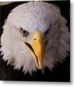 Close Up Encounter Metal Print by Patty Descalzi
