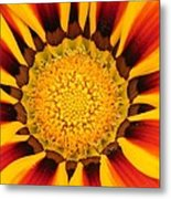 Close Up Marigold Metal Print