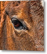 Close Up Of A Horse Eye Metal Print by Paul Ward