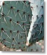 Close-up Of A Prickly Pear Cactus Metal Print