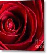 Close Up Of A Red Rose Metal Print