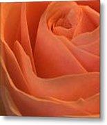 Close Up Of A Rose Bud Metal Print