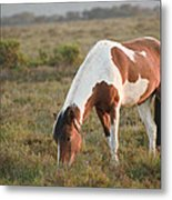 Close Up Of Brown And White New Forest Pony Horse At Sunrise In  Metal Print