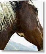 Close-up Of Brown Pinto Pony With White Metal Print