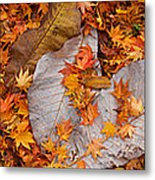 Close-up Of Fallen Maple Leaves Metal Print