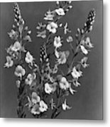 Close Up Of Gentian Speedwell Flowers Metal Print