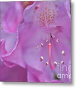 Close Up Of Inside Of Rhododendron Flower  Metal Print
