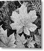 Close Up Of Leaves Metal Print