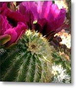 Close Up Of Pink Cactus Flowers Metal Print
