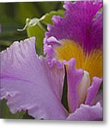 Close-up Of Purple Orchid Flowers Metal Print