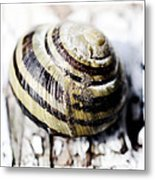 Close Up Of Sea Shell Metal Print by Tommytechno Sweden