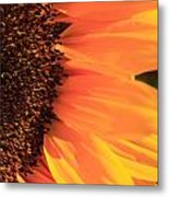 Close Up Of The Florets And Petals Of A Sunflower Metal Print