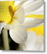 Close Up Of White Daisy Metal Print