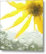 Close-up Of Yellow Wildflower In Grand Metal Print