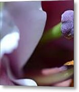 Close Up On A Lily Metal Print