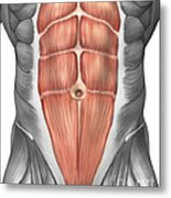 Close-up View Of Male Abdominal Muscles Metal Print