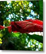 Closed Hibiscus Metal Print by Mark Malitz