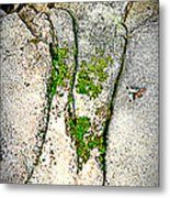 Closely Metal Print by Debbie Sikes