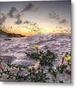 Closeup Flowers On The Beach Metal Print
