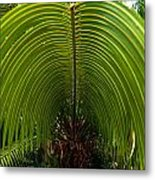 Closeup Of A Palm Tree Leaf Metal Print