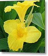 Closeup Of A Tropical Yellow Canna Lily Metal Print