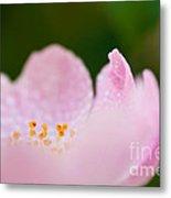 Closeup Of A Wet Pink Rose   Metal Print
