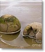 Closeup Of Famous Spherical Moeraki Boulders In Nz Metal Print