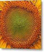 Closeup Of Sunflower Metal Print