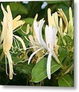 Closeup Shot Of Lonicera European Honeysuckle Flower Metal Print