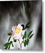 Cloud Mountain Cherokee Rose Metal Print