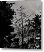 Clouds And Trees Metal Print