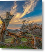Clouds Over Broken Tree At Sunset Metal Print