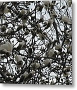 Cloudy Day For Young Magnolias Metal Print