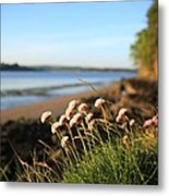 Clover Metal Print by Maeve O Connell