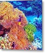 Clown Fish In Coral Garden Metal Print