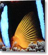 Clownfish 1 Metal Print