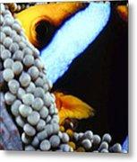 Clownfish 7 Metal Print