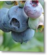 Clump Of Blueberries 2 Metal Print