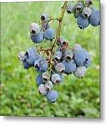 Clump Of Blueberries 3 Metal Print
