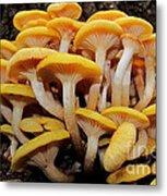 Cluster Fungi Metal Print