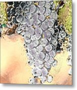 Cluster Of Grapes Metal Print by Artist and Photographer Laura Wrede